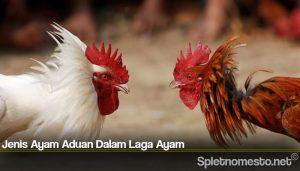 Jenis Ayam Aduan Dalam Laga Ayam
