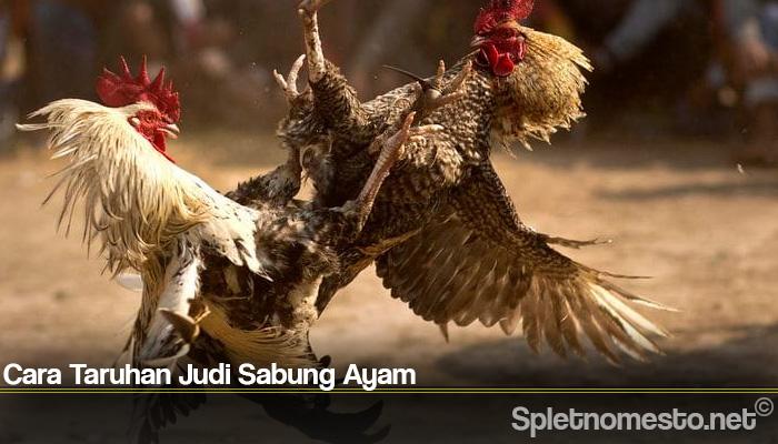 Cara Taruhan Judi Sabung Ayam